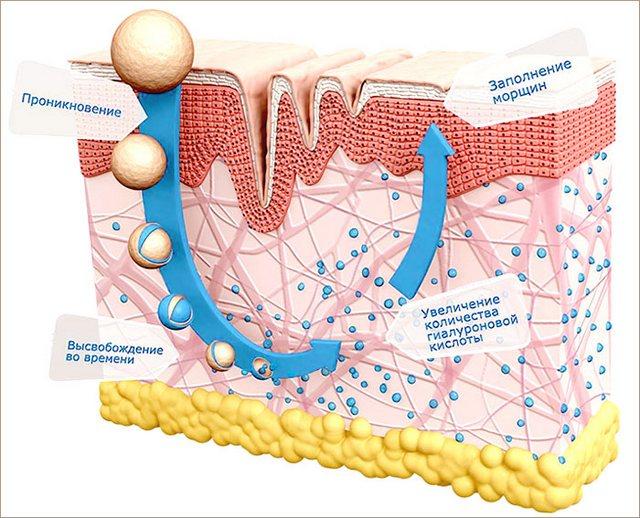 действие гиалуроната в коже