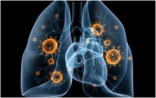 Формирование иммунитета при туберкулезе