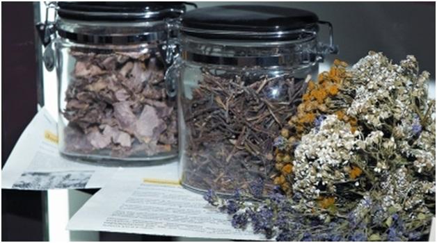 Самые эффективные травы от туберкулеза и способы их применения