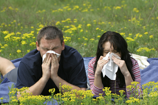 Причины и признаки частого чихания