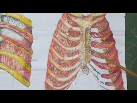 Разновидности торакопластики грудной клетки с описанием