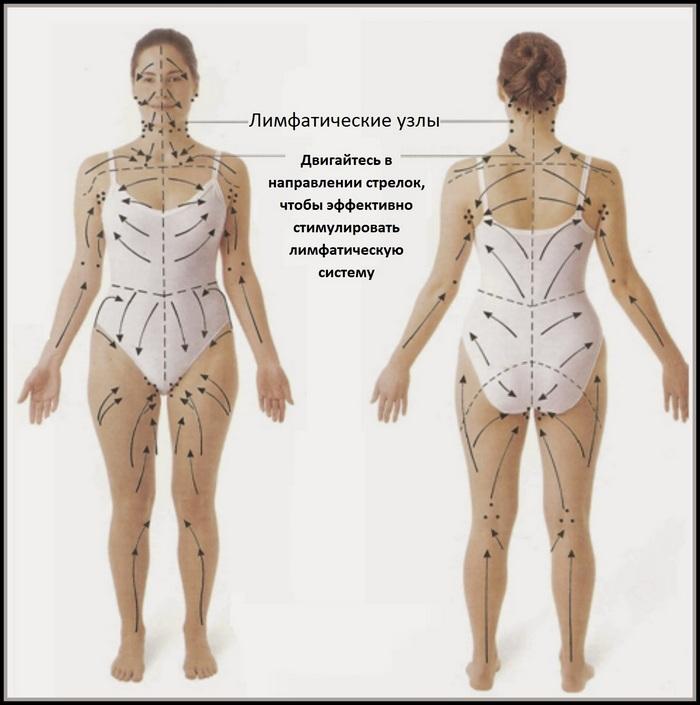 направление лимфотока в теле