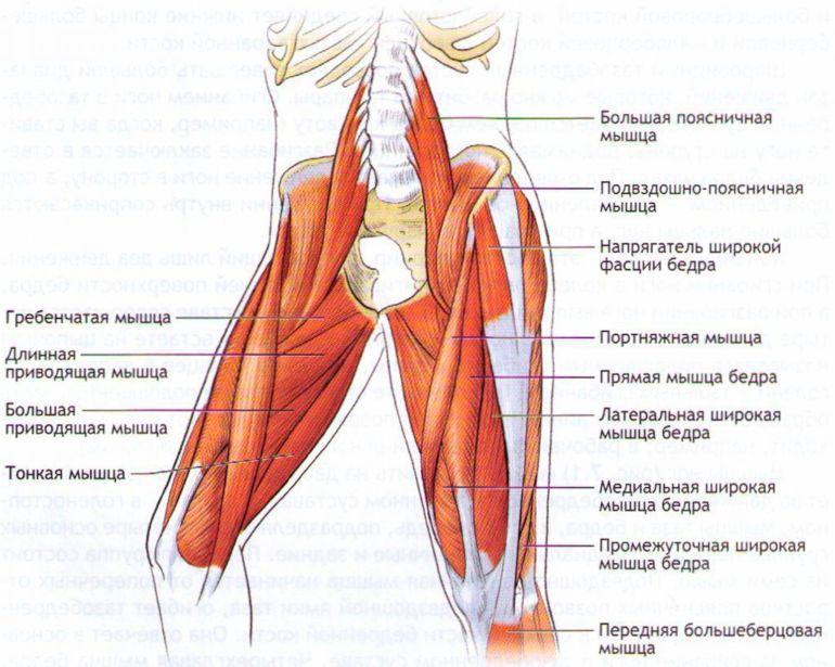 Названия мышц ноги